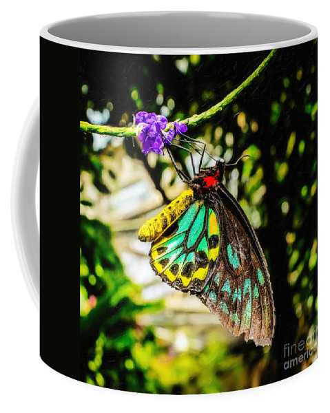 Cairns Birdwing Coffee Mug featuring the photograph Cairns Birdwing by Jon Burch Photography
