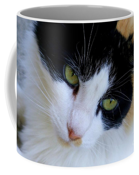 White Coffee Mug featuring the photograph Calico 1 by Mary Deal