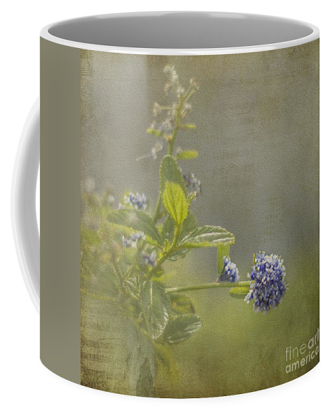 Clare Stokes Coffee Mug featuring the photograph California Lilac by Clare Bambers