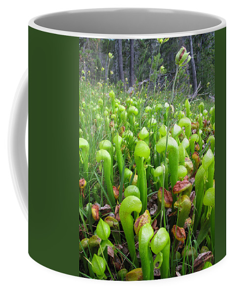 Pitcher Coffee Mug featuring the photograph California Pitcher Plant by Dianne Phelps