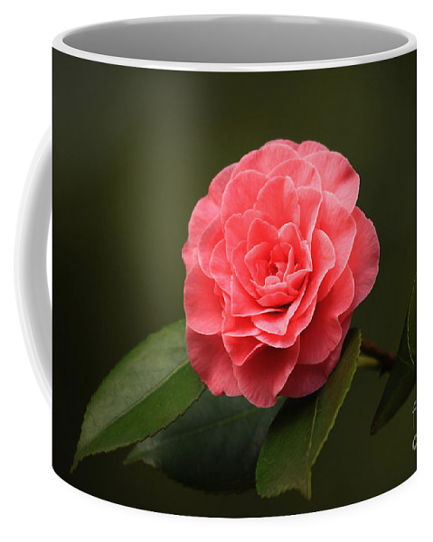 Flower Coffee Mug featuring the photograph Camellia by Winston Rockwell