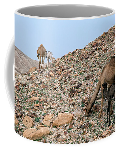 Camels Coffee Mug featuring the photograph Camels At The Israel Desert -1 by Dubi Roman