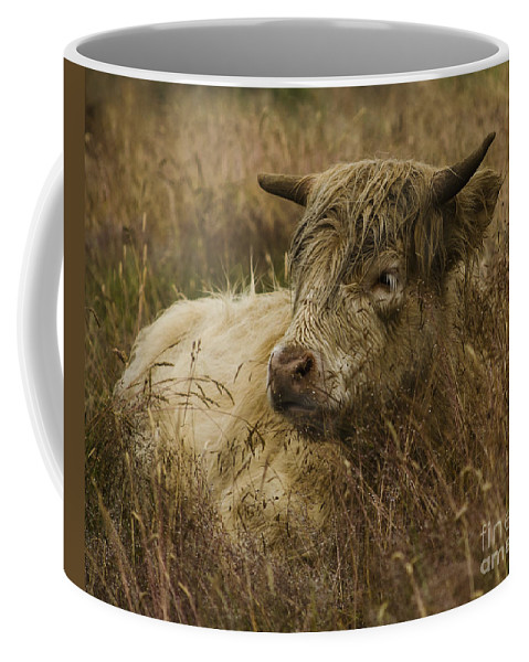 Cattle Coffee Mug featuring the photograph Camouflaged Cow by Linsey Williams