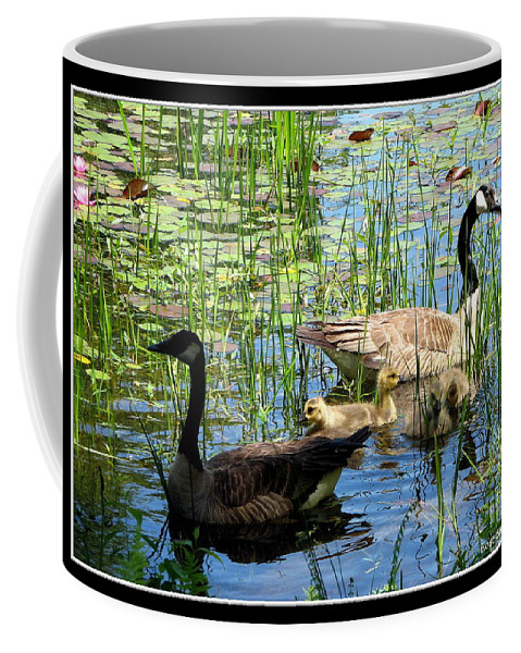 Geese Coffee Mug featuring the photograph Canada Geese On Lily Pond At Reinstein Woods by Rose Santuci-Sofranko