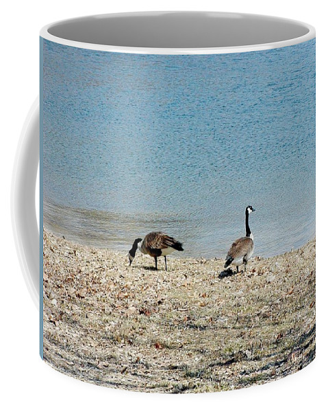 Fowl Coffee Mug featuring the photograph Canadian Geese 2 by Scenic Sights By Tara