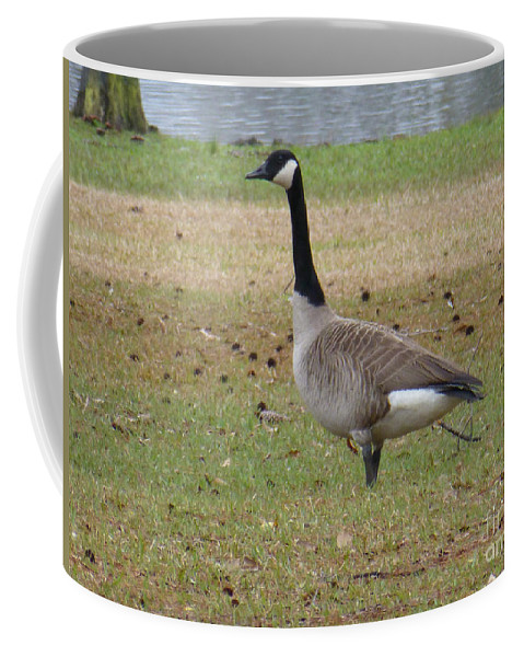 Tree Coffee Mug featuring the photograph Canadian Goose Strut by Joseph Baril