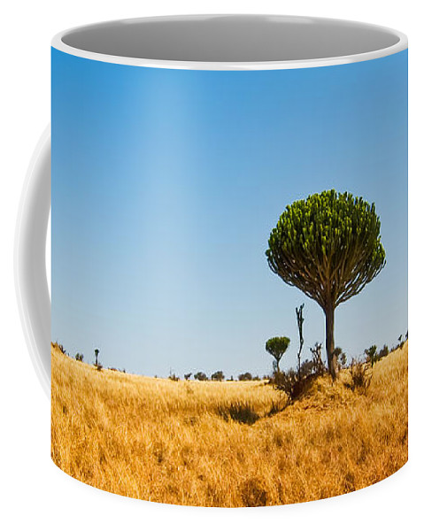 3scape Photos Coffee Mug featuring the photograph Candelabra Trees by Adam Romanowicz