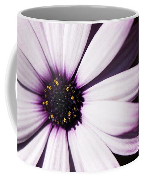 Osteospermum Coffee Mug featuring the photograph Cannington Roy by Anne Gilbert