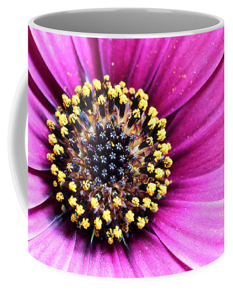 Bloom Coffee Mug featuring the photograph Cape Daisy Close Up by Paul Fell