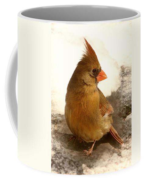 Cardinal Coffee Mug featuring the photograph Cardinal In Snow by Karen Beasley