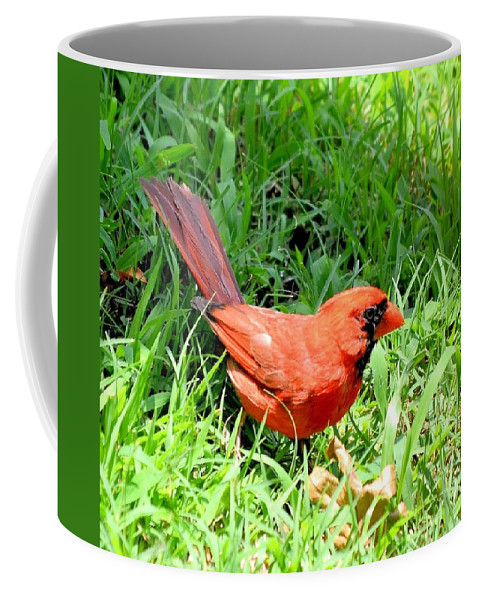 Cardinal Red Coffee Mug featuring the photograph Cardinal Red by Maria Urso