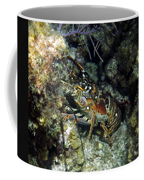 Nature Coffee Mug featuring the photograph Caribbean Reef Lobster On Night Dive by Amy McDaniel