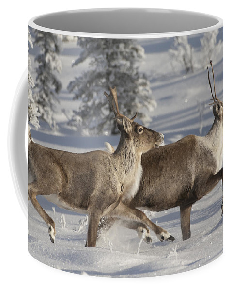 Feb0514 Coffee Mug featuring the photograph Caribou Running In Snow Alaska by Michael Quinton