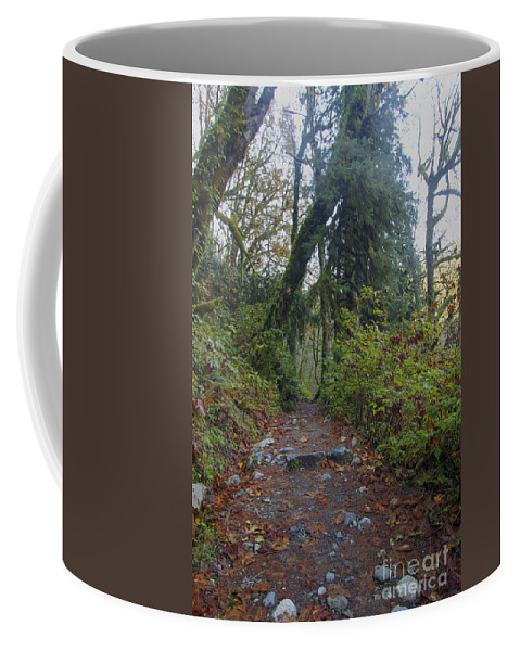 Landscape Coffee Mug featuring the photograph Cascade Forest Path by Darleen Stry