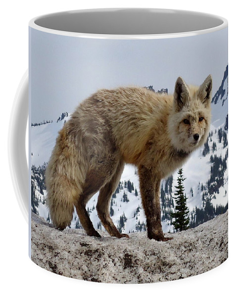 Cascade Red Fox Coffee Mug featuring the photograph Cascade Red Fox 1 by Peter Mooyman