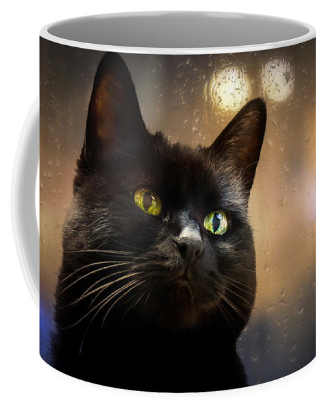Cat Coffee Mug featuring the photograph Cat In The Window by Bob Orsillo