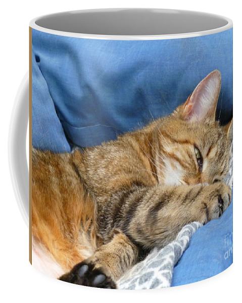 Sleepy Cat Coffee Mug featuring the photograph Cat Nap by Lingfai Leung