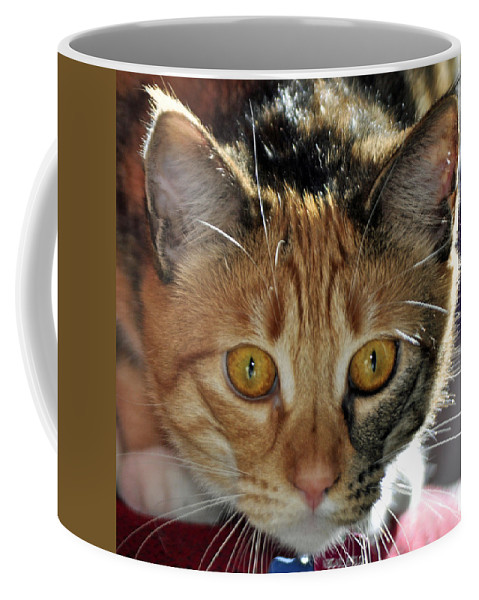 Feline Coffee Mug featuring the photograph Cat Stare Down by Tikvah's Hope