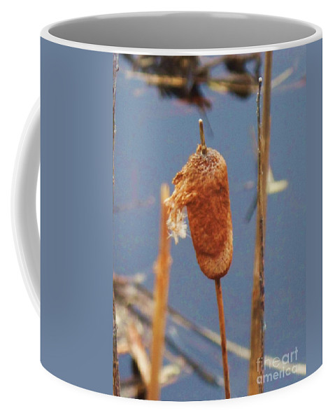 Lake Coffee Mug featuring the photograph Catails by Eric Schiabor