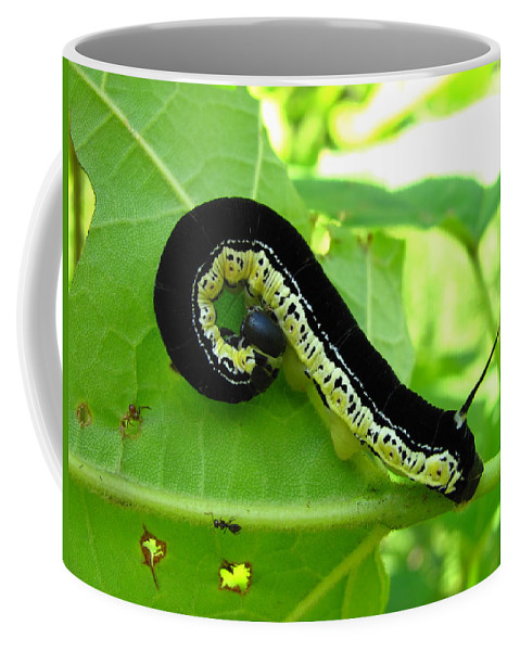 Maryland Catalapa Sphinx Moth Catapillar Images Black And Yellow Catapillar Images Forest Biodiversity Catalapa Tree Caterpillar Nature Old Growth Forest Ecology Entomology Moth Larve Colorful Critter Prints Catalapa Sphinx Moth Catapillar Photograph Prints Coffee Mug featuring the photograph Catalapa Sphinx Caterpillar by Joshua Bales