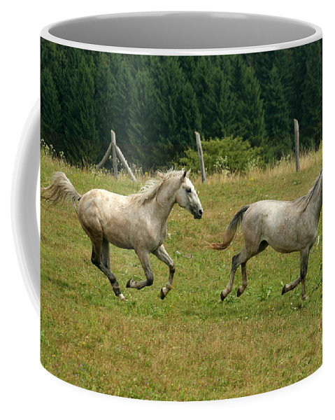 Grey Horse Coffee Mug featuring the photograph Catch Me If You Can by Angel Ciesniarska