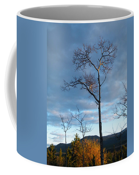 Catching Some Rays Coffee Mug featuring the photograph Catching Some Rays by Brian Boyle
