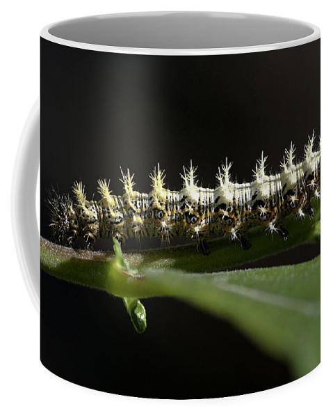Caterpillar Coffee Mug featuring the photograph Caterpillar by Betty Depee