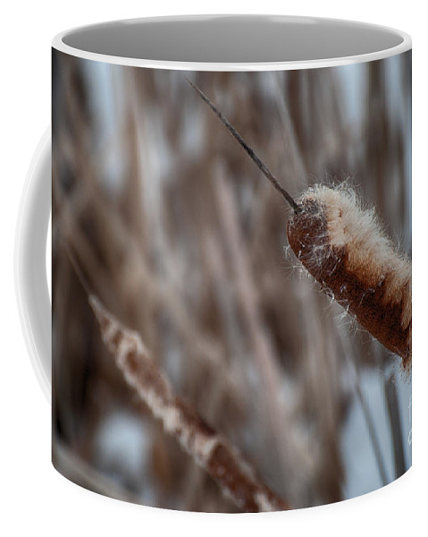 Cattail Coffee Mug featuring the photograph Cattails by Bianca Nadeau