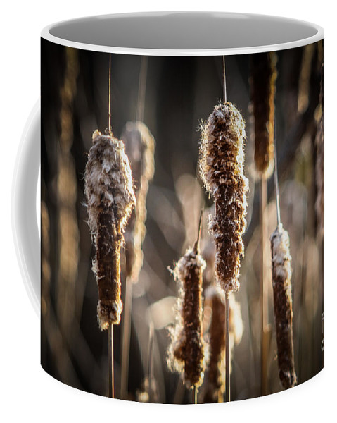 Cattails Coffee Mug featuring the photograph Cattails by Ronald Grogan