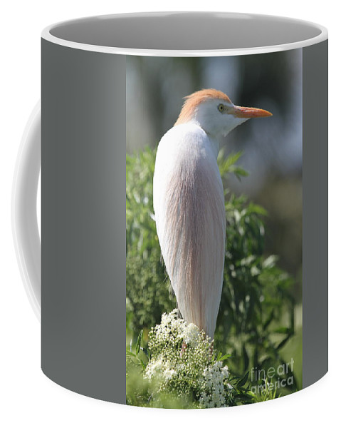 White Coffee Mug featuring the photograph Cattle Egret by Ken Keener