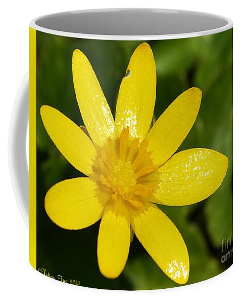 Yellow Coffee Mug featuring the photograph Celandine by Felicia Tica