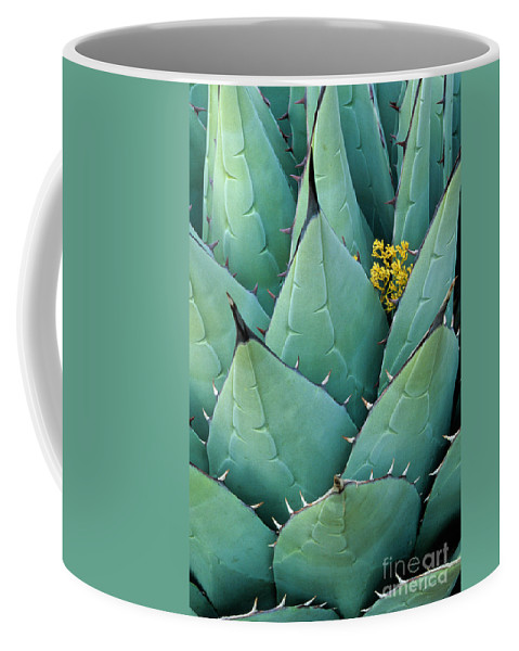 Agave Americana Coffee Mug featuring the photograph Century Plant And Tiny Blossom by Inge Johnsson