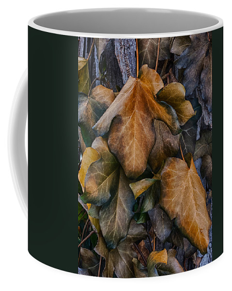 Leaves Coffee Mug featuring the photograph Changing Colors by Mike Burgquist