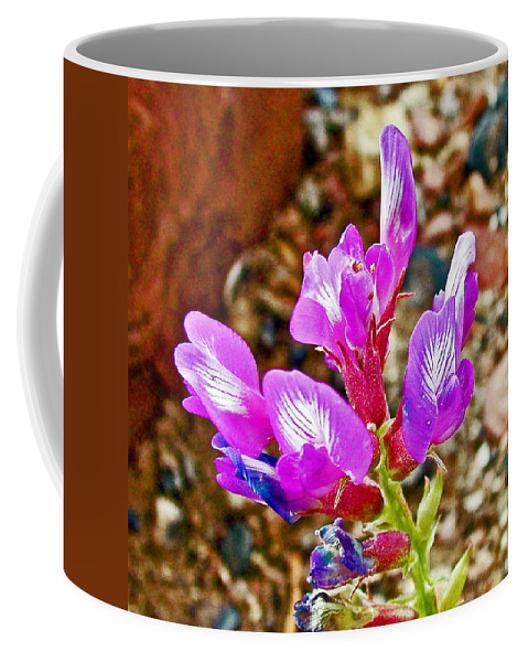 Chaparral Pea In Painted Desert Of Petrified Forest National Park Coffee Mug featuring the photograph Chaparral Pea In Painted Desert Of Petrified Forest National Park-arizona by Ruth Hager