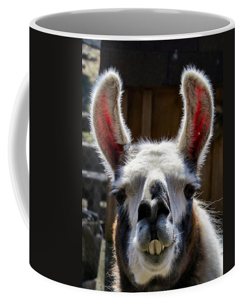 Alpaca Coffee Mug featuring the photograph Cheese by Art Dingo