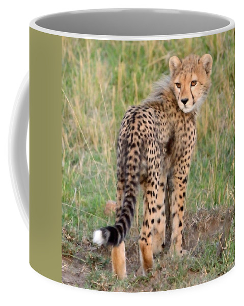 Cute Coffee Mug featuring the photograph Cheetah Cub Looking Your Way by Tom Wurl