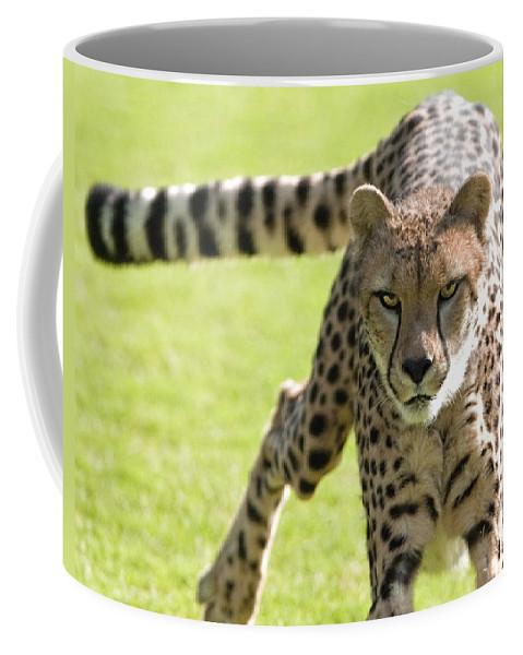 Animal Coffee Mug featuring the photograph cheetah Running Portrait by William Bitman