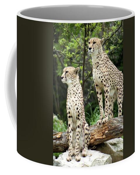 Cheetah Coffee Mug featuring the photograph Cheetah's 02 by Pamela Critchlow