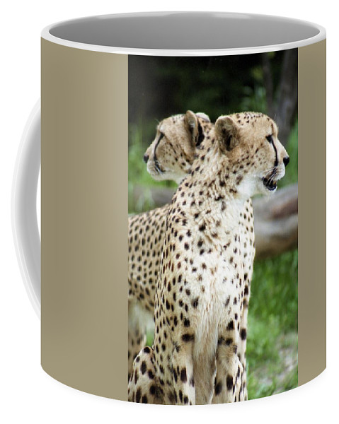Cheetah Coffee Mug featuring the photograph Cheetah's 04 by Pamela Critchlow