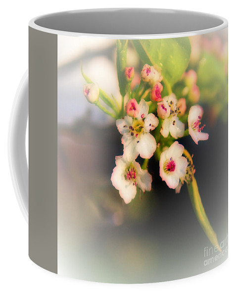 Cherry Blossom Coffee Mug featuring the photograph Cherry Blossom Flowers by Jeremy Hayden