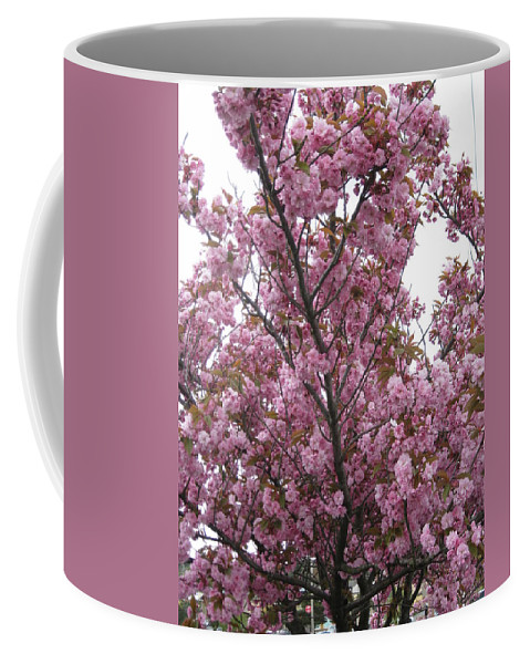 Cherry Blossoms Coffee Mug featuring the photograph Cherry Blossoms 2 by David Trotter