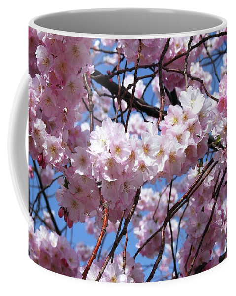 Cherry Blossoms Coffee Mug featuring the photograph Cherry Blossom Trees Of Branch Brook Park 3 by Allen Beatty