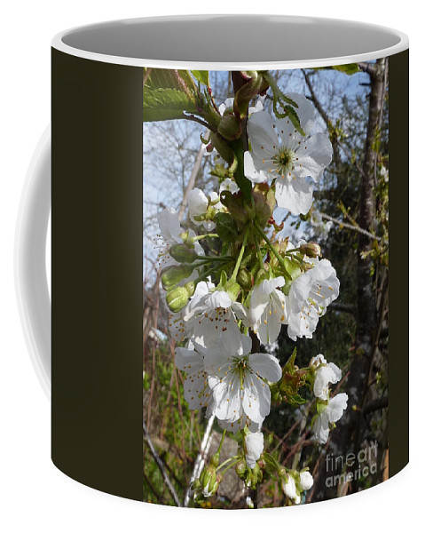Cherry Blossoms Coffee Mug featuring the photograph Cherry Blossoms by Rain Shine