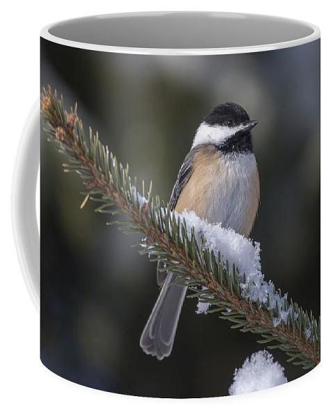 Bird Coffee Mug featuring the photograph Chickadee On The Spruce by Richard Kitchen