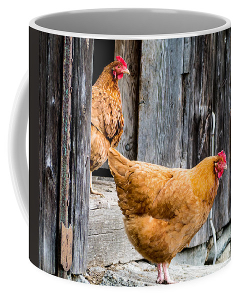 Chicken Rooster Farm Farm Yard Comb Feathers Farming Agriculture Coffee Mug featuring the photograph Chickens at the Barn by Edward Fielding