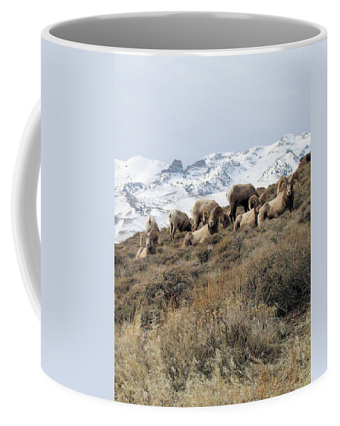 Nevada Coffee Mug featuring the photograph Chimney Rock Rams by Darcy Tate