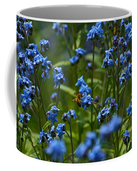 Chinese Forget Me Nots And Honey Bee Coffee Mug featuring the photograph Chinese Forget Me Nots And Honey Bee by Byron Varvarigos