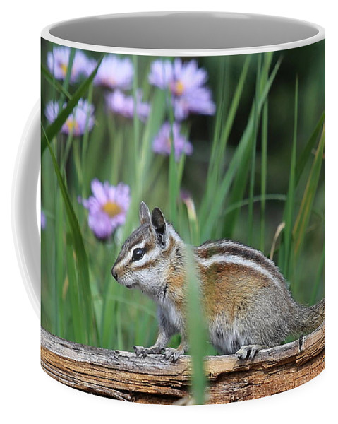 Chipmunk Coffee Mug featuring the photograph Chippy by Marty Fancy