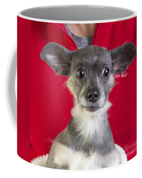 Dog Coffee Mug featuring the photograph Christmas Dog by Edward Fielding