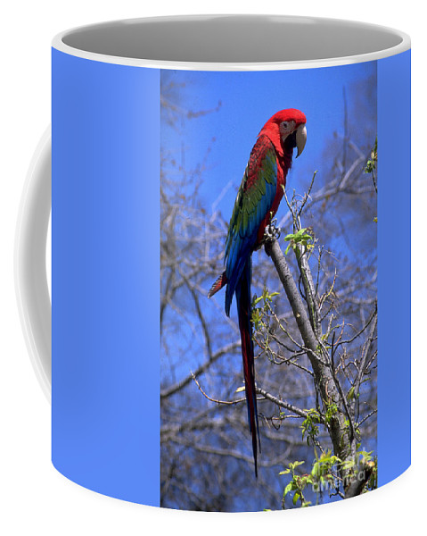 Bird Coffee Mug featuring the photograph Cincy Parrot by Gary Gingrich Galleries